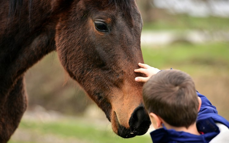 young boy petting a horse's face